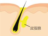 メンズエステ 皮脂線