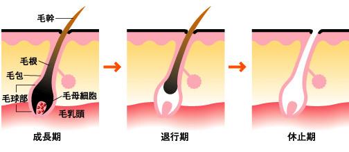 メンズエステ 毛周期